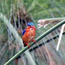 Vogelwelt Uganda
