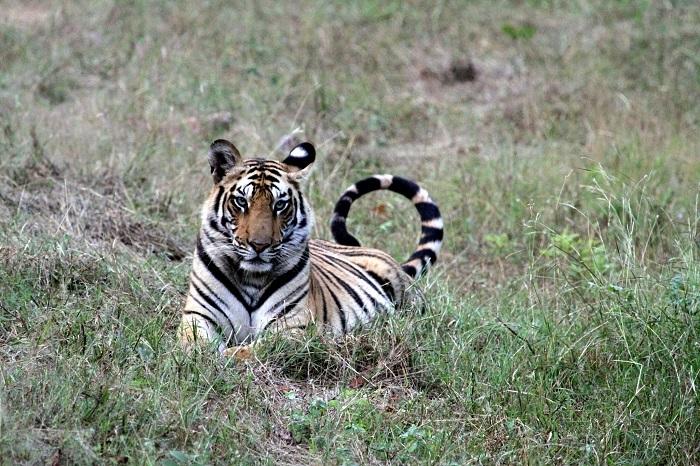 Impressionen Safari Indien
