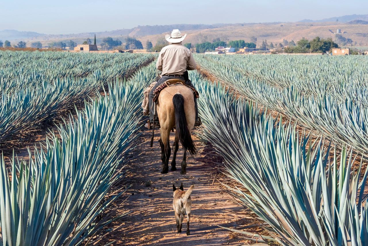 Landschaft Mexiko